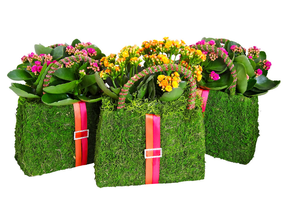 Luludi Living Art Gift Moss Purses