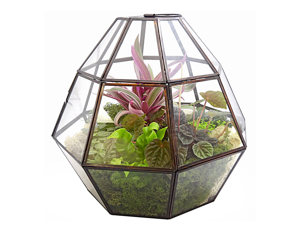 Luludi Living Art Greenhouse Oyster Terrarium