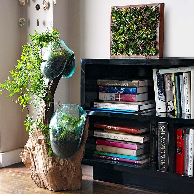 Modern Home Terrarium and Succulent Box