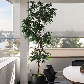Office Conference Planter