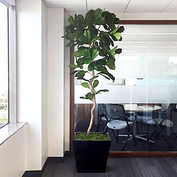 Office Planter