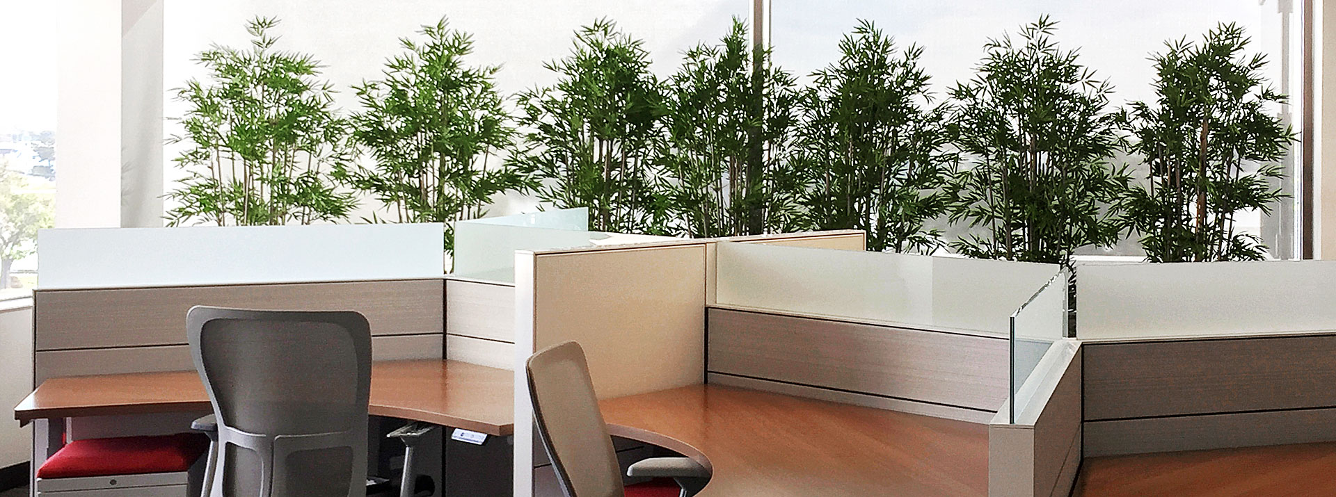 Office Wall Bamboo Planters