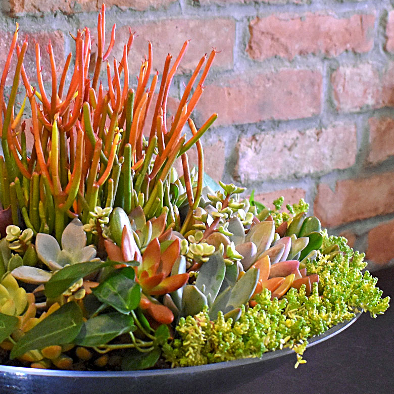 Luludi Living Art The Second Succulent Display