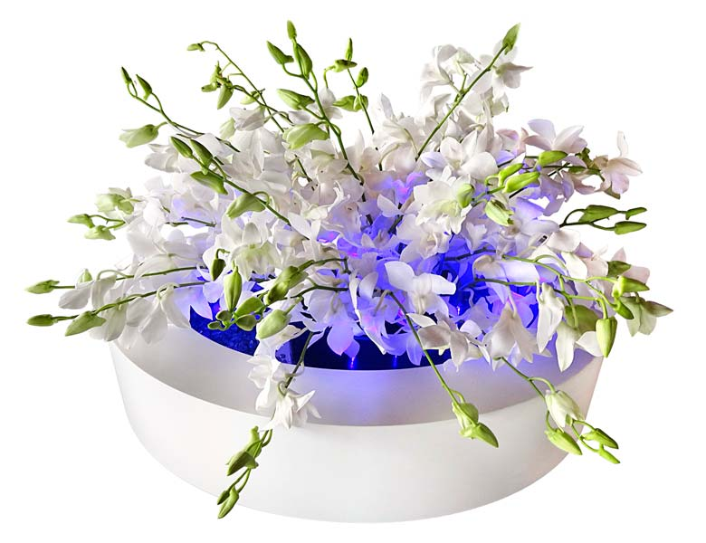 Orchid Olympia Wedding Centerpiece