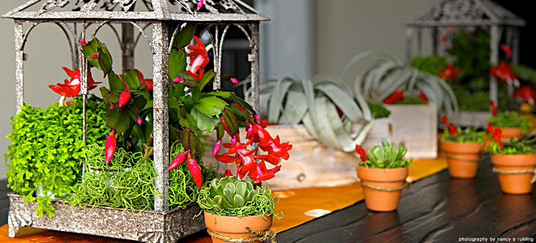 Luludi Living Art Christmas Cactus Succulent Terrarium Tabletop