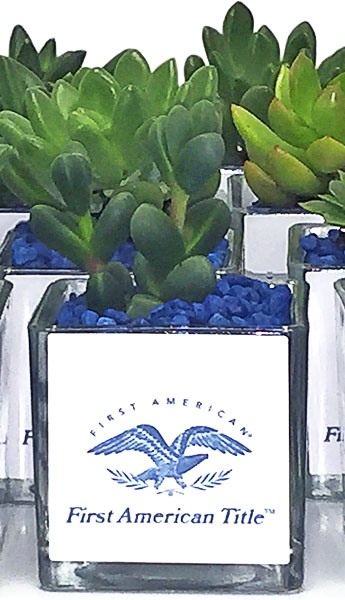 Luludi Living Art First American Title Branded Succulent Terrariums