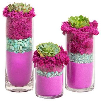 Luludi Living Art Succulent Trio Terrarium
