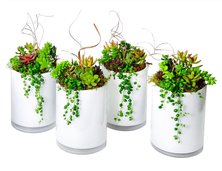 Luludi Living Art Succulent Tall Whites