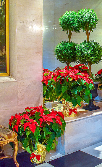 Luludi Living Art Lobby Holiday Poinsettias