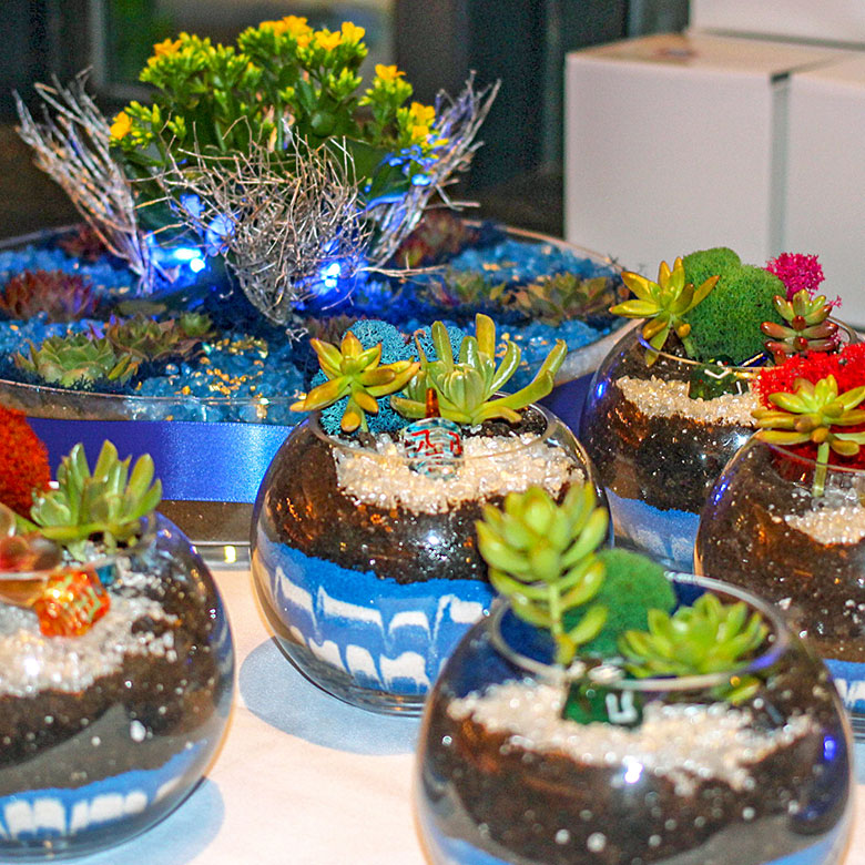 Luludi Living Art Holiday Dreidel Terrariums