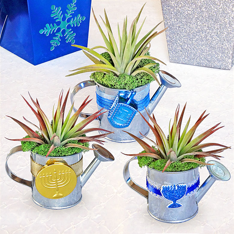 Luludi Living Art Hanukkah Terrariums