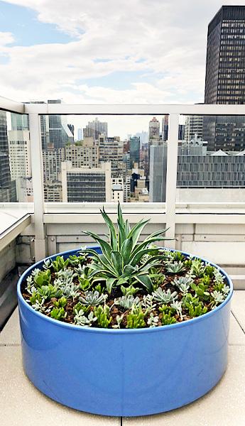 Luludi Living Art 305 East 51 St Rooftop Succulents