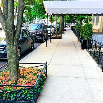 Luludi Living Art 923 Park Ave Tree Summer Landscape Design