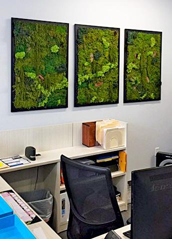 Luludi Living Art Office Moss Wall Triptych