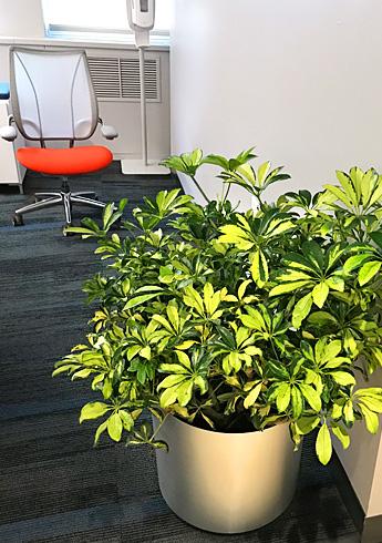 Luludi Living Art RIMS Interior Office Planters