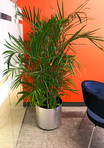 Luludi Living Art RIMS Interior Office Landscaping Trees