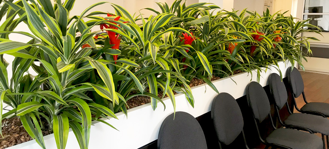 Luludi Living Art Landscaping Office Interior Planters