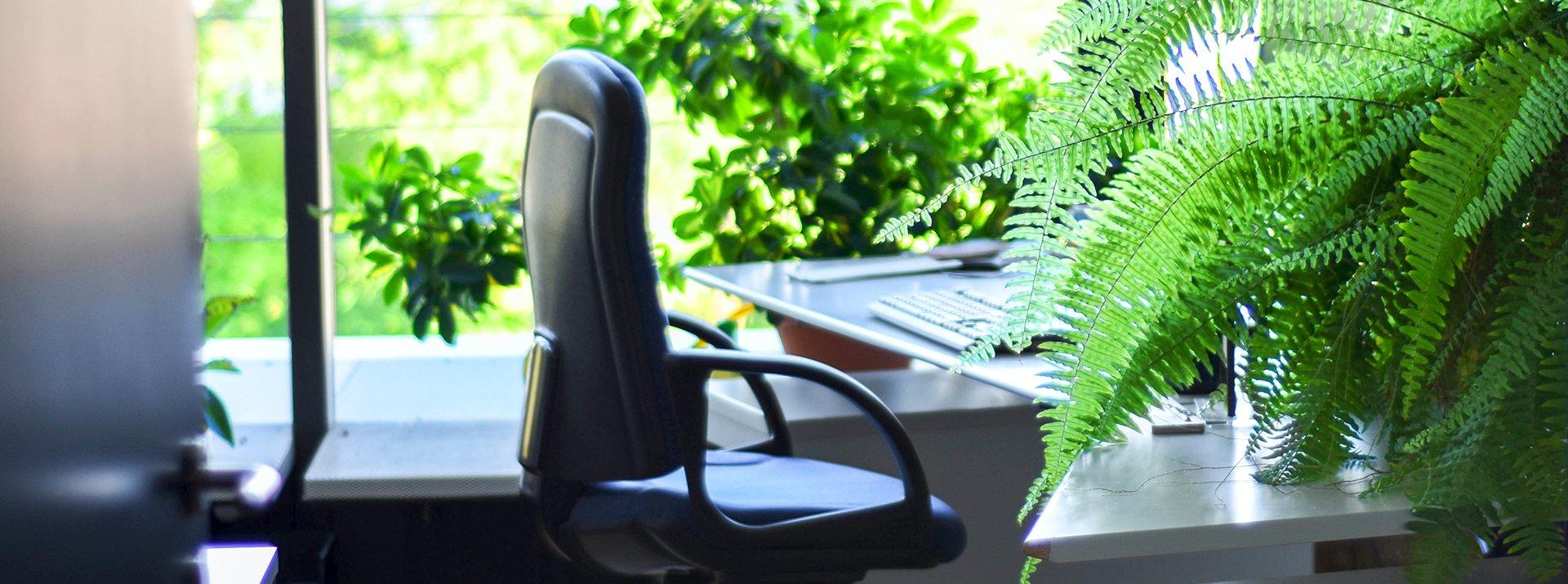 Office plants on desktops
