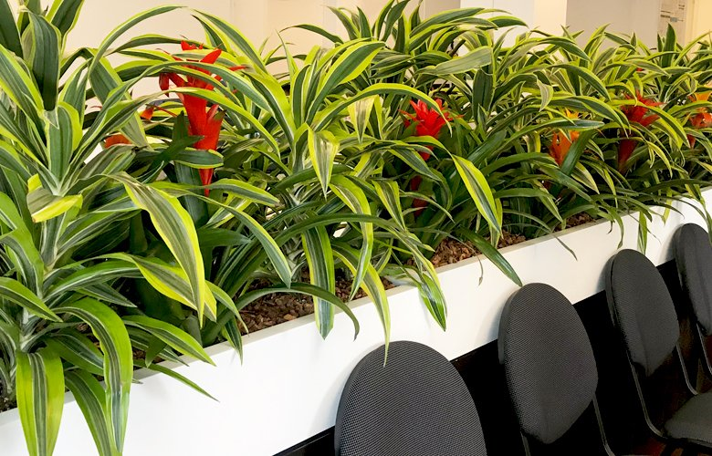 Plant divider in front of chairs